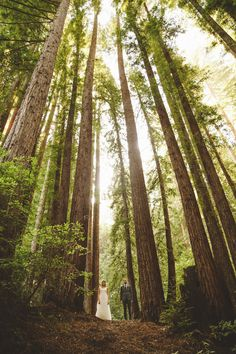 An A-frame wedding in the Redwoods || Bay Area California Wedding Photographer…