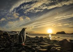 It was very early in the Antarctic morning and I was walking along the beach…