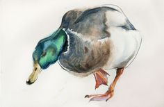 duck#1 watercolor on paper 20*30 sm by Olga Flerova