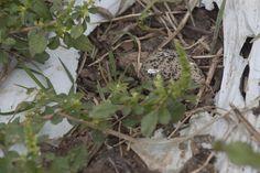 Uma linda descoberta em nosso canteiros! Sitio do Moinho - horta orgânica