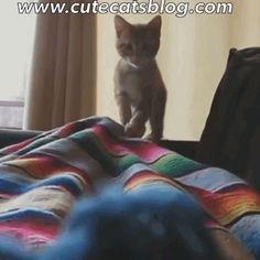 Cute Cats Blog