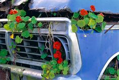 Flower covered pick-up truck near Half Moon Bay, CA.