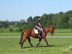 6yrs old quarter horse mare for sale