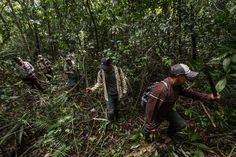 Ranchers, loggers and smugglers all threaten tropical forests, but in areas given to local communities, the deforestation rate is close to zero, a study finds.