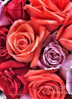 http://fineartamerica.com/featured/-roses-marylee-parker.html?newartwork=true sale % flowers# roses