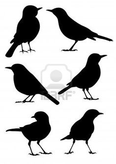 Birds Silhouette - 6 different vector illustrations Stock Photo