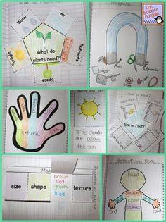 Kindergarten Interactive Science Notebook Activities $