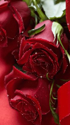 The perfect Red Roses Shiny Animated GIF for your conversation. Flowers Gif, My Flower, Pretty Flowers, Beautiful Red Roses, Beautiful Gif, Beautiful Pictures, Rosas Gif, Love Rose, Planting Flowers