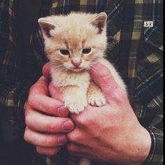 Little #kitten