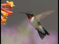 receta para bebedero de colibries/recipe for hummingbird feeder