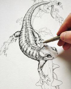 Alpine Salamander Pen Sketch, Animal Pen Illustration, Animal Pen Sketch Pen Sketch, Sketches, Illustration Artists, Animal Illustrations, Human Reference, Amazing Drawings, Crayon, Animal Paintings, Bird Art