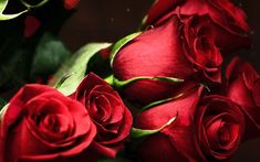 lovely-red-animated-roses.gif (640×400)