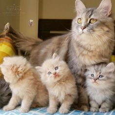 """From @spooky_clinton: """"Spending the day with mommy! """" #cutepetclub by…"""