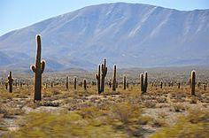 Los Cardones National Park -  Argentina   Wikipedia, the free encyclopedia