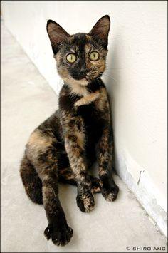 Lovely Cat by shiroang via deviantART.com