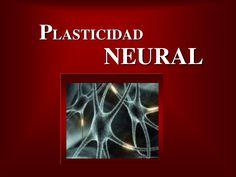 Plasticidad Neural by Centro Medico Nacional Siglo XXI via slideshare
