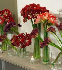 Fleur de lys dans un vase transparent fleurs et potager for Amaryllis fleuriste