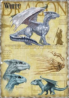 White Dragon by Richard Sardinha