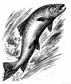Andrew Davidson how to fish - Pesquisa do Google
