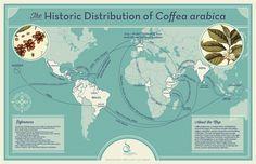 Coffee Bean Species – Arabica and Robusta - Espresso Coffee - Quora