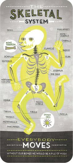Body Systems by Rachel Ignotofsky http://rachelignotofskydesign.com