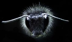 Bees are able to detect weak electrical signals that flowers give off