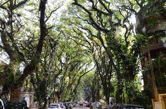 Jacarandás na rua Gonçalo de Carvalho em Porto Alegre Rio Grande do Sul. Esta rua é considerada uma das mais belas do mundo. Título mais que merecido! Mande uma foto de outros lindos lugares de Porto Alegre com as tags #CatracaPOA #ViNoCatraca (: Solange_Z/iStock)