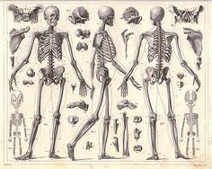 Engravings of anatomical sketches by Johann Georg Heck. Perfect underlay for keeping body mechanics in mind when designing armour.