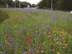 How to create a mini wild flower meadow. You can still sow your wild flower seed in late autumn. Some perennials need the winter cold to spark them to germinate. Flower Garden, Meadow Garden, Flower Pots, Flower Landscape, Plants, Wild Flower Meadow, British Wild Flowers, Flower Field, Flower Seeds