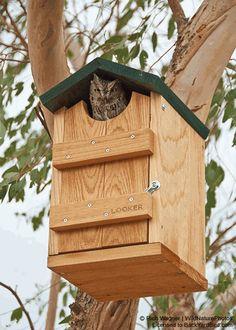 cedar owl house from Backyard Bird Co....