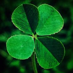 Four leaf clover My lucky day Lauren B Montana