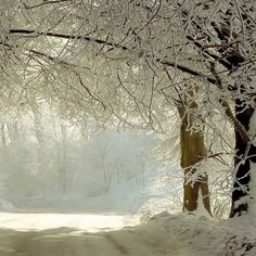 2037 Snow Covered Trees Backdrop