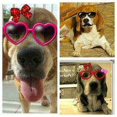 Mãe Menina, Billy Boy e Fiona! ♥♥♥