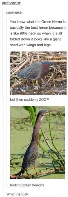ZOOP- Lol! How do they do that? See. The older you get the more Muppet noises you make.