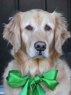 Golden Retriever Merry Christmas Card Puppy Holiday Dogs Santa Claus Dog Puppies Xmas