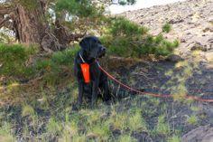 Etna Nord – Um den Monte Nero   TravelDog.at mit Cooper :-) Am Meer, Den, Animals, Pet Dogs, Animales, Animaux, Animal, Animais