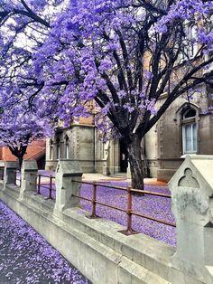 Adelaide Grote Street in Spring