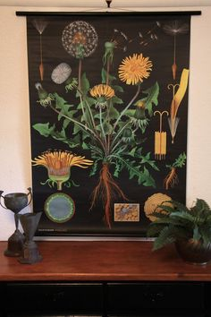 Dandelion Botanical Wall Chart design by Empirical Style