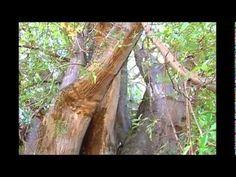 Um Pé de Quê   Baobá   Parte 2