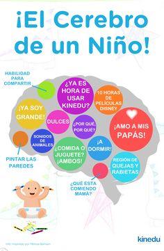 ¡Ahora echemos un vistazo al cerebro de un niño!  ¿Qué opinas?