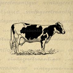 Printable Holstein Cow Digital Image Farm Animal Download Illustration Graphic Antique Clip Art. High quality digital graphic from antique artwork for making prints, iron on transfers, tea towels, and more. Great for use on etsy items. This image is high quality, high resolution at 8½ x 11 inches. Transparent background version included with every graphic.