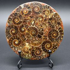 Large-Madagascar-Natural-Ammonite-Shell-Jurassic-Fossil-Disk-Half-Cut-117MM