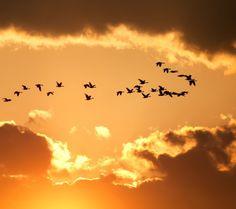 Картинки по запросу birds in the sky