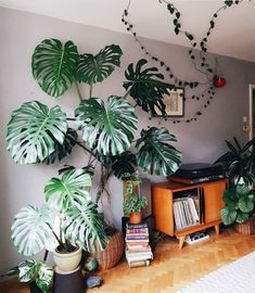 28 diy plant stand ideas to fill your living room with greenery 8 . - 28 diy plant stand ideas to fill your living room with greenery 8 - Faux Philodendron, Plantas Indoor, Decoration Plante, Monstera Deliciosa, House Plants Decor, Plants For Home, Inside Plants, Live Plants, Diy Plant Stand