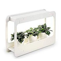 Plant Grow LED Light Kit Indoor Herb Garden with Timer Function Low Voltage Indoor Harvest Elite for Gourmet or Plant Enthusiasts Rosemary Lavender Seed Pod Ornamental Gift Best Grow Lights, Grow Lights For Plants, Herb Garden Kit, Lawn And Garden, Garden Cart, Herbs Garden, Garden Tools, Hydroponic Gardening, Hydroponics