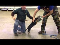 German Shepherd puppy obedience training | 9 weeks old | Valor K9 Academy, LLC - YouTube