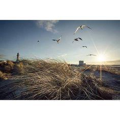 skyline / warnemünde #skyline #warnemünde #mecklenburg #mecklenburgvorpommern #mv #ostsee #ostseebad #balticsea #germany #sea #leuchtturm #teepott #lighthouse #hotelneptun #birds #möwen #sunset #sonnenuntergang #beautiful #sky #düne #landscape #love #home #spring #2016 #frühling