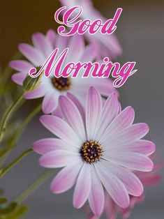 In today's post, we are presenting for you good morning images with beautiful flowers. If you are looking for good morning images with flowers, then you have come to the right place. Good Morning Video Songs, Good Morning Friends Images, Good Morning Monday Images, Good Morning Meme, Good Morning Sister, Good Morning Image Quotes, Good Morning Photos, Good Morning Messages, Good Morning Greetings