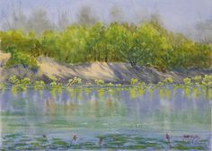Water Lillies, Ord river