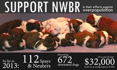 According to the ASPCA, only 10% of the 6,000,000 - 7,000,000 animals received by shelters each year have been spayed/neutered. Northwest Boxer Rescue is doing everything we can to make an impact on overpopulation. We are on pace to spay, neuter and adopt out over 400 dogs in 2013. The only way we can do this is with your support. Donate $10 through Groupon today and help us save the wiggle. 100% of your contribution comes back to the rescue to be spent on spays, neuters, vaccinations…